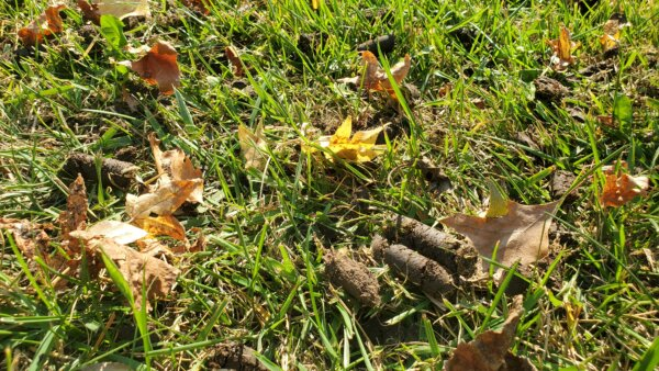 El Dorado, KS - Aeration and overseeding can increase the growth of your lawn!